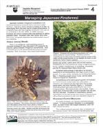 managing-japanese-knotweed