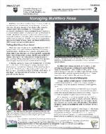 managing-multiflora-rose